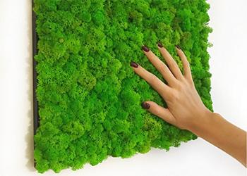 Выполнение работ по озеленению